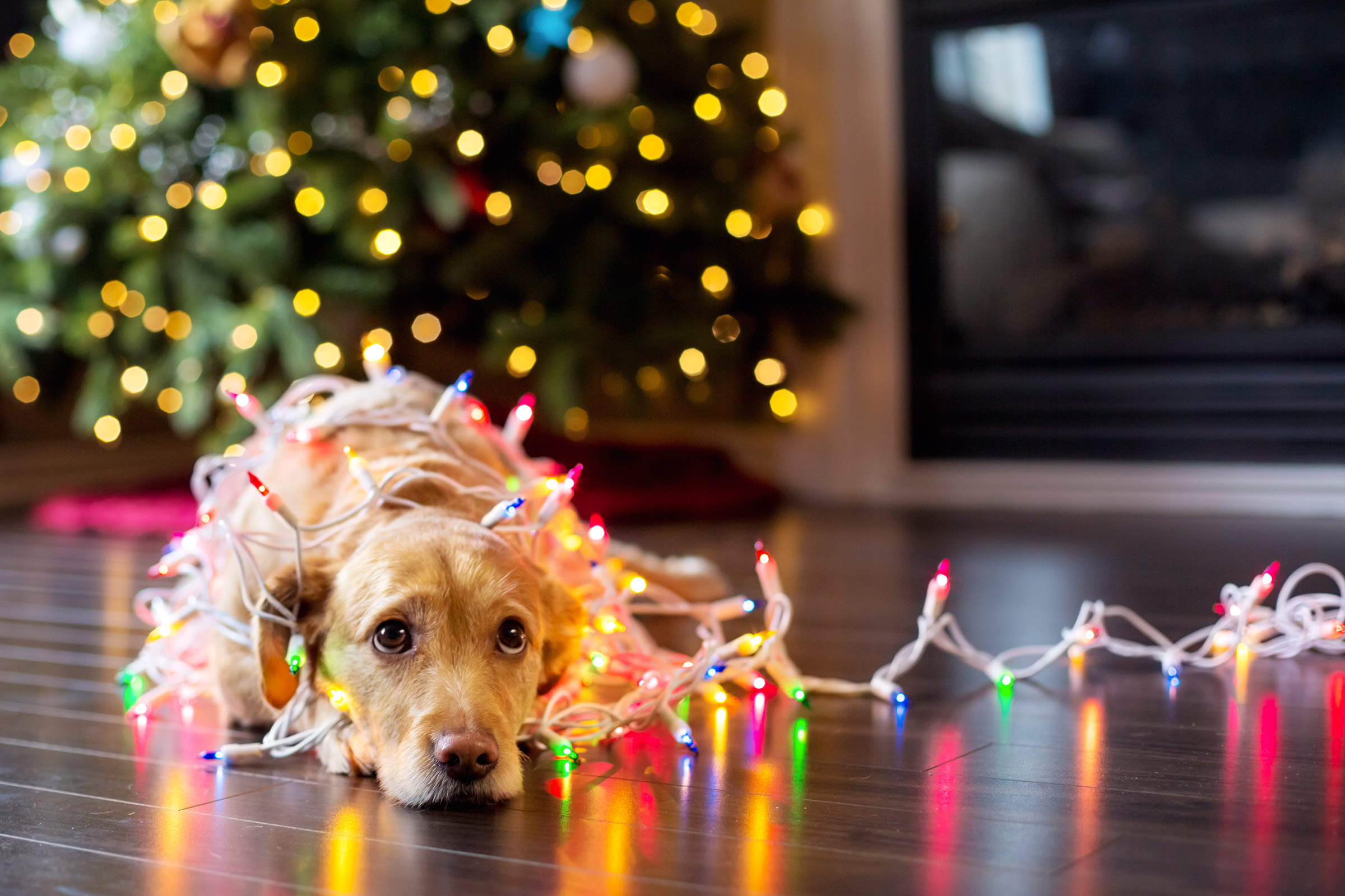 Dog on Christmas