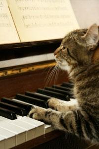 Ketzel, musical cat