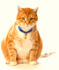 October 12 is Pet Obesity Awareness Day