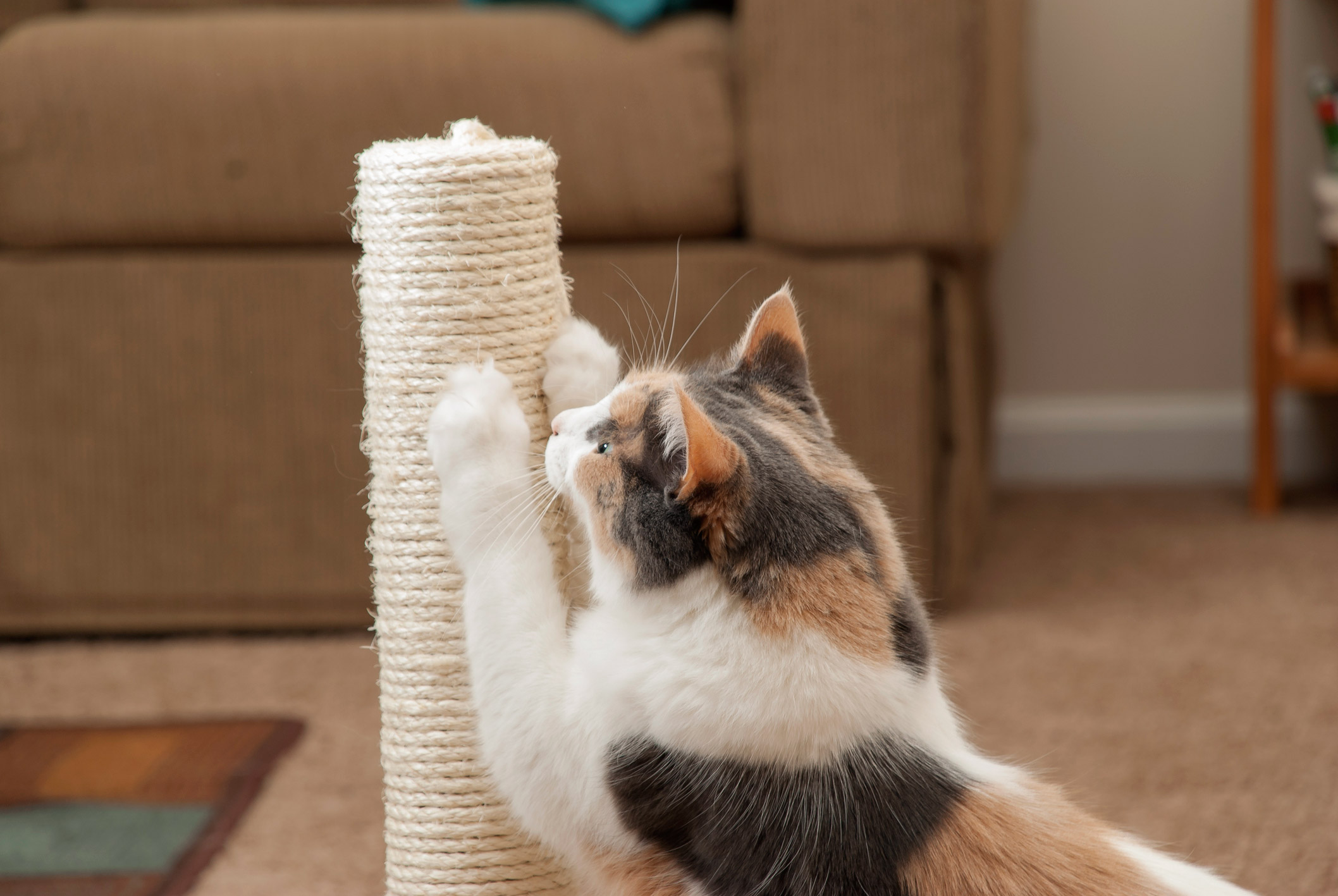 Have your cat scratch a post, not the couch