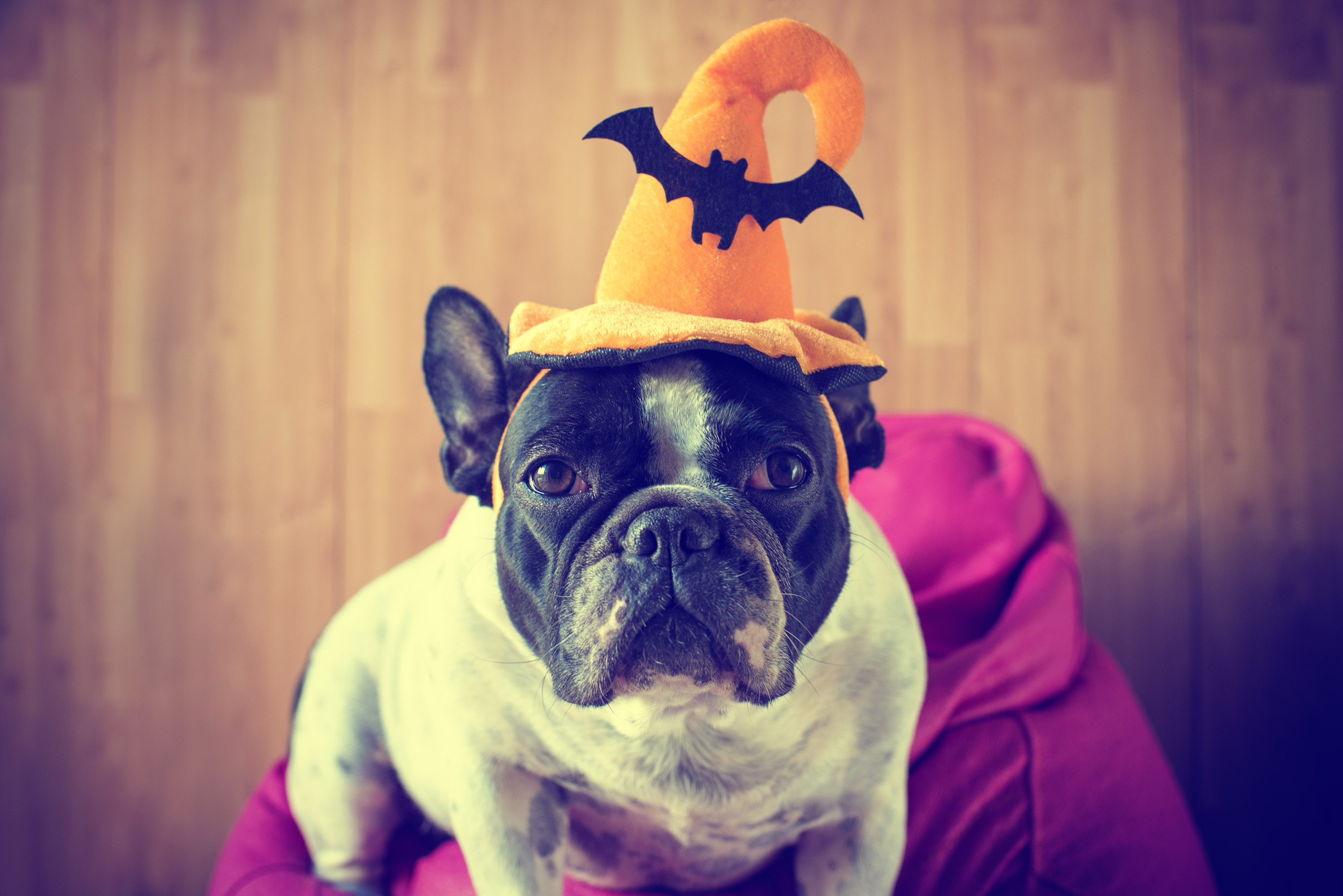 Halloween Pet Celebrations