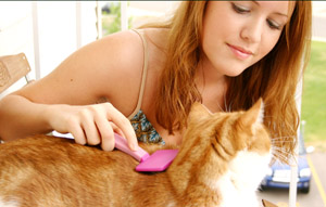 Grooming is a good way to bond with your cat.