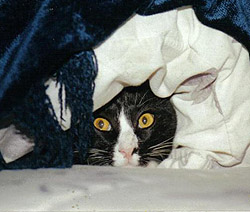 Hiding is a common fearful behavior.