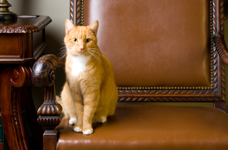 Tennessee Man Leaves Mansion to Cats