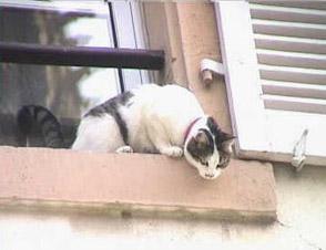 Preparing Pets for Disasters