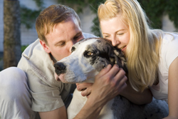 Divorce affects pets and children