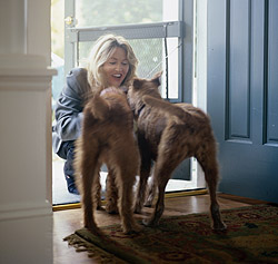 How your dog responds to you at home affects his behavior outside the home.