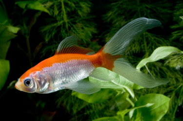 Unlike humans, fish have the ability to eat continuously, digest what they need, and excrete the rest.