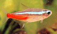 Fish require different feeding schedules