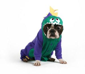 One in ten households will dress their dogs up for Halloween this year.