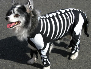 Make sure your pet's costume allows for easy movement.