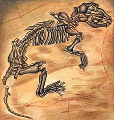 Drawing of a Miacis Skeleton