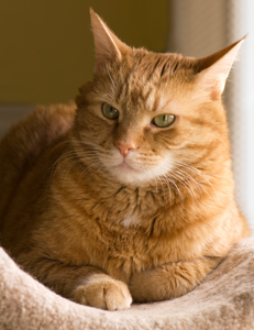 Change Generates Stress For Older Cats