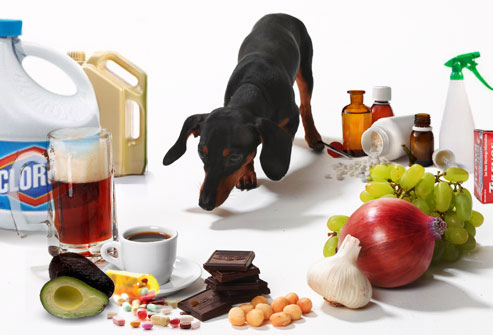 Toxic Foods for Pets