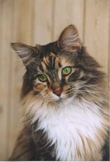 As your cat ages, changes occur in his or her physical condition that warrant more frequent trips to the veterinarian.
