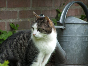 Keep your cat cool during the summer months