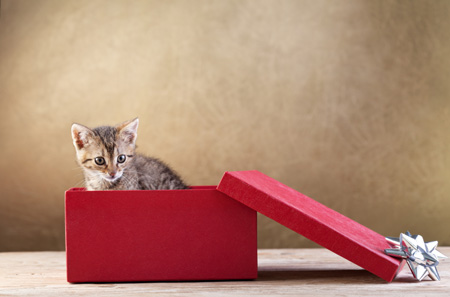 ASPCA Revises Stance on Pets as Gifts