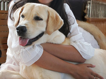 Rosie, Court Dog
