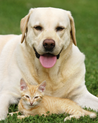 Eabies affects dogs and cats